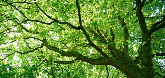 Baumgutachter: Baum im Park